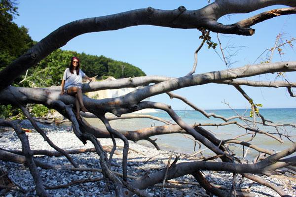 amandine-tree