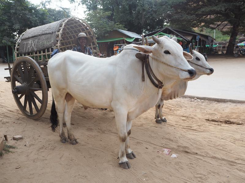 Mandalay sagaing myanmar burma january 2015