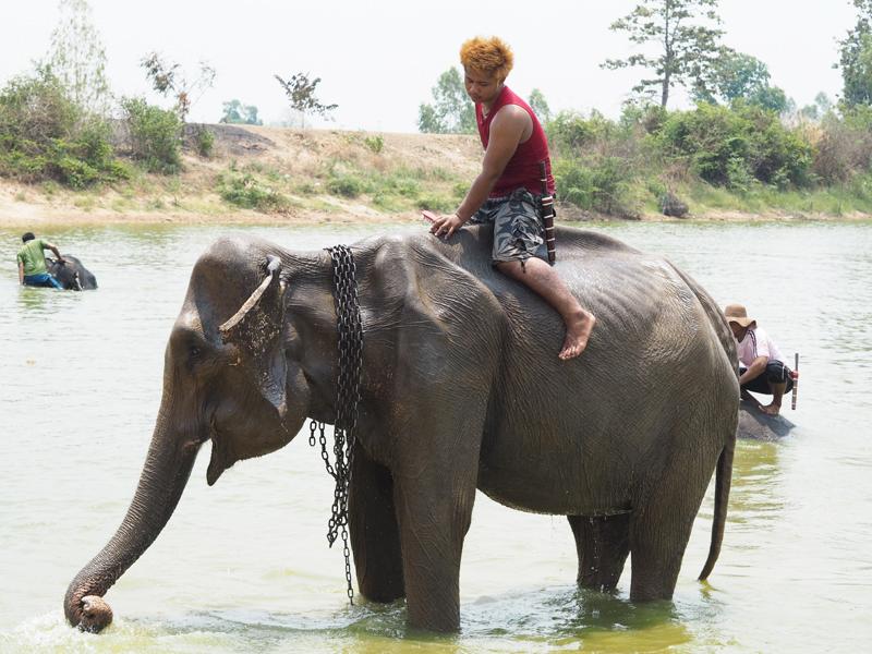 Baan Klang Village elephant camp Surin Thailand