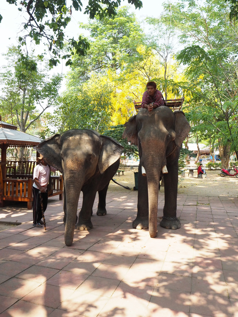Elephant and it's mahout at Baan Klang Village Surin