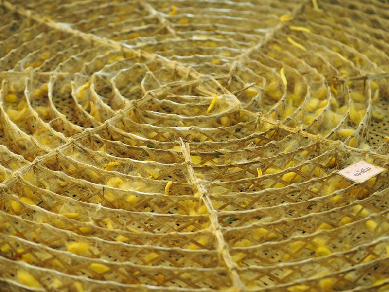 Queen Sirikit Sericulture thai silk Surin Thailand