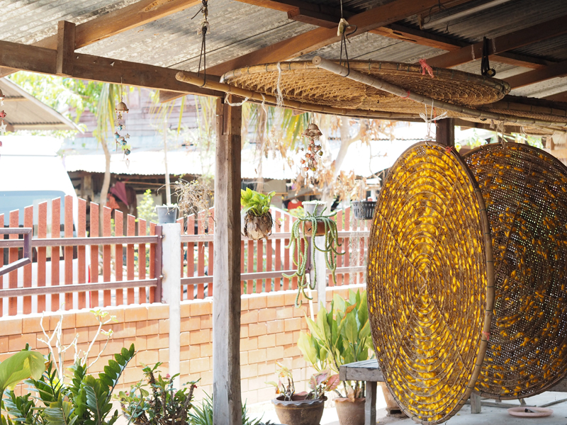 Larva cocoons in wooden containers on the terrace of the thai house