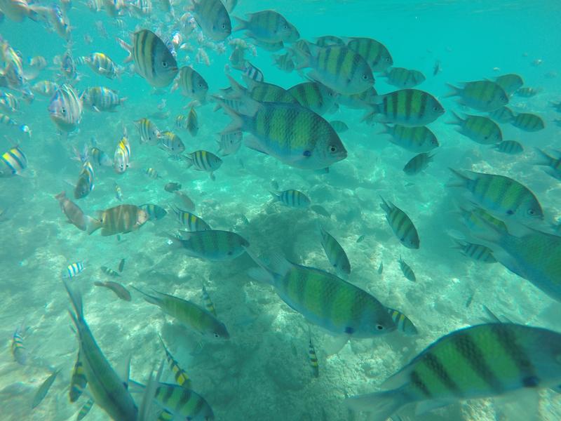 snorkeling Loh Sama Bay Koh Phi Phi Island