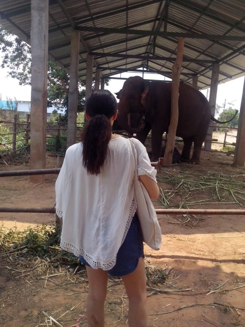 Baan Klang Village elephant camp Surin