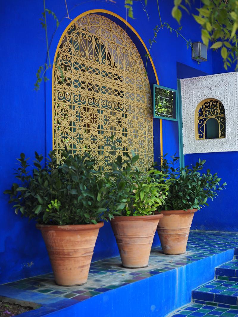 Majorelle garden must see Marrakech