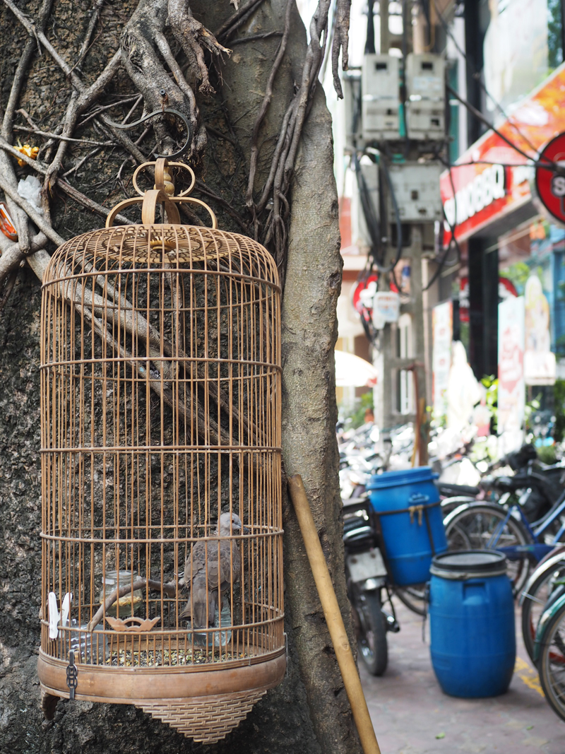 Pictures Hanoi old quarter bird in cage