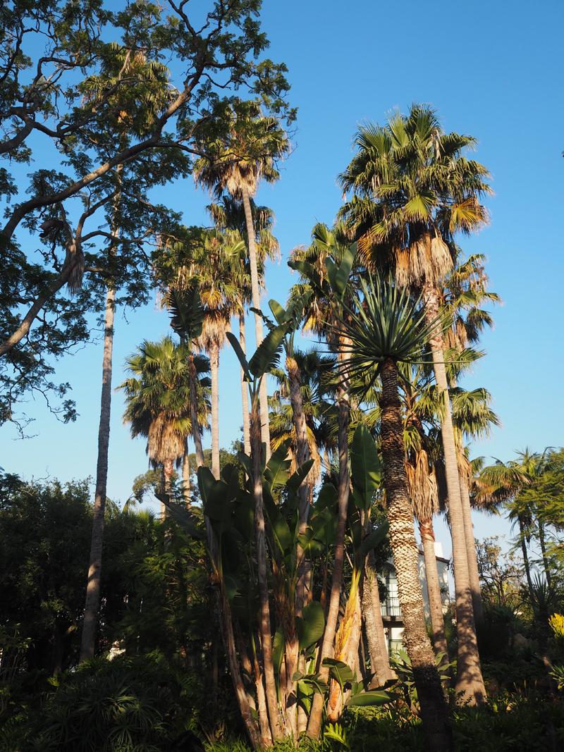 plam trees garden Bedroom at Belmond El Encanto in Santa Barbara luxury resort