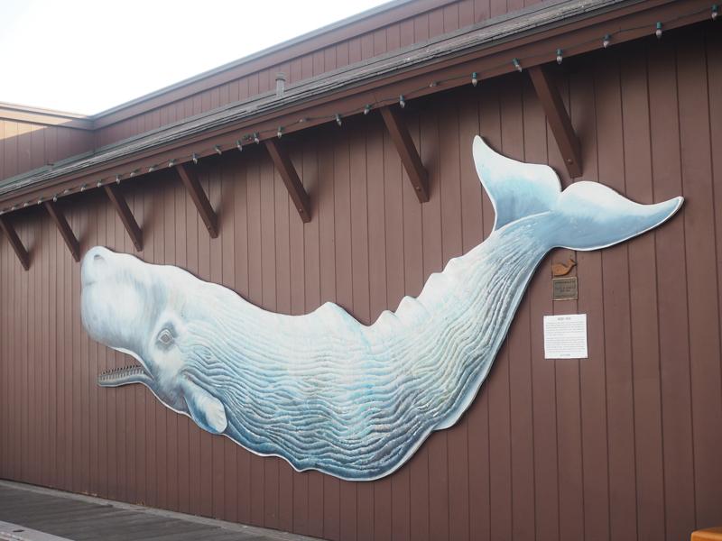 whale in Santa Barbara California