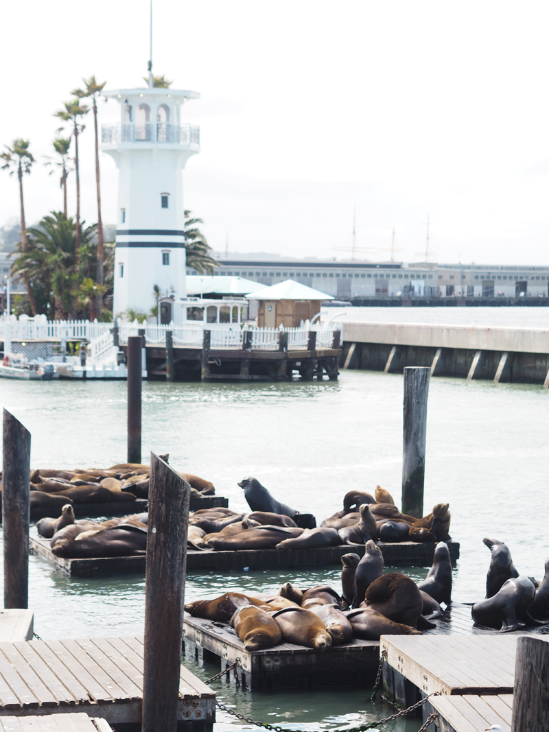 A day in San Francisco sea lions