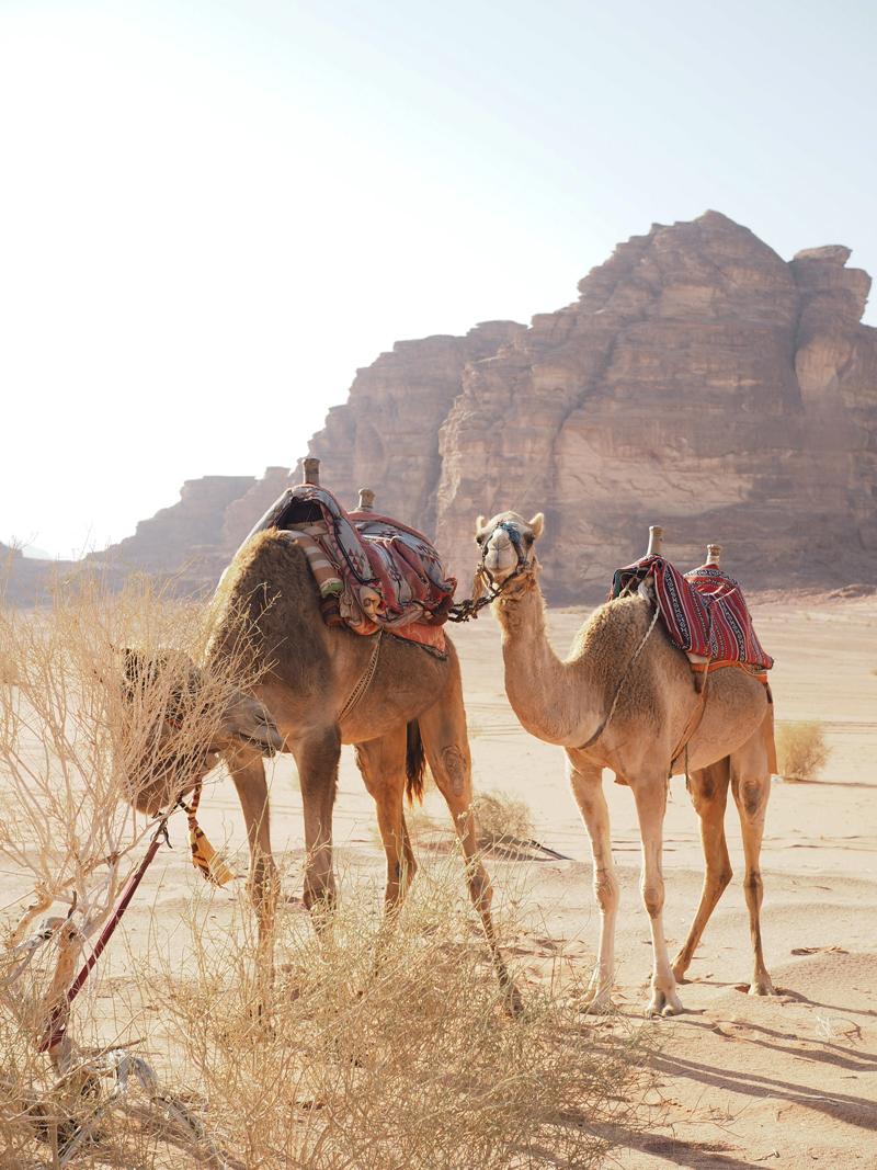 camel ride in Wadi Rum desert Jordan