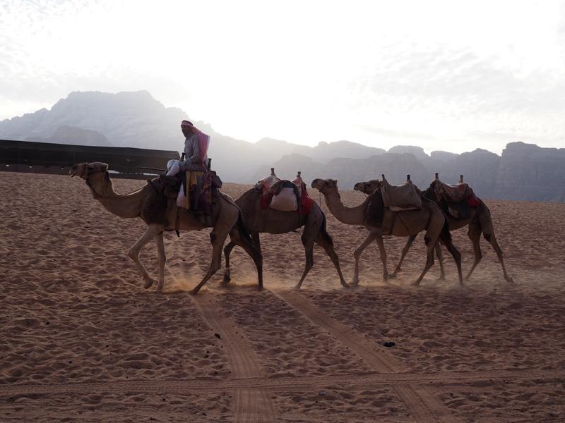 traveling to Jordan Wadi Rum desert camels