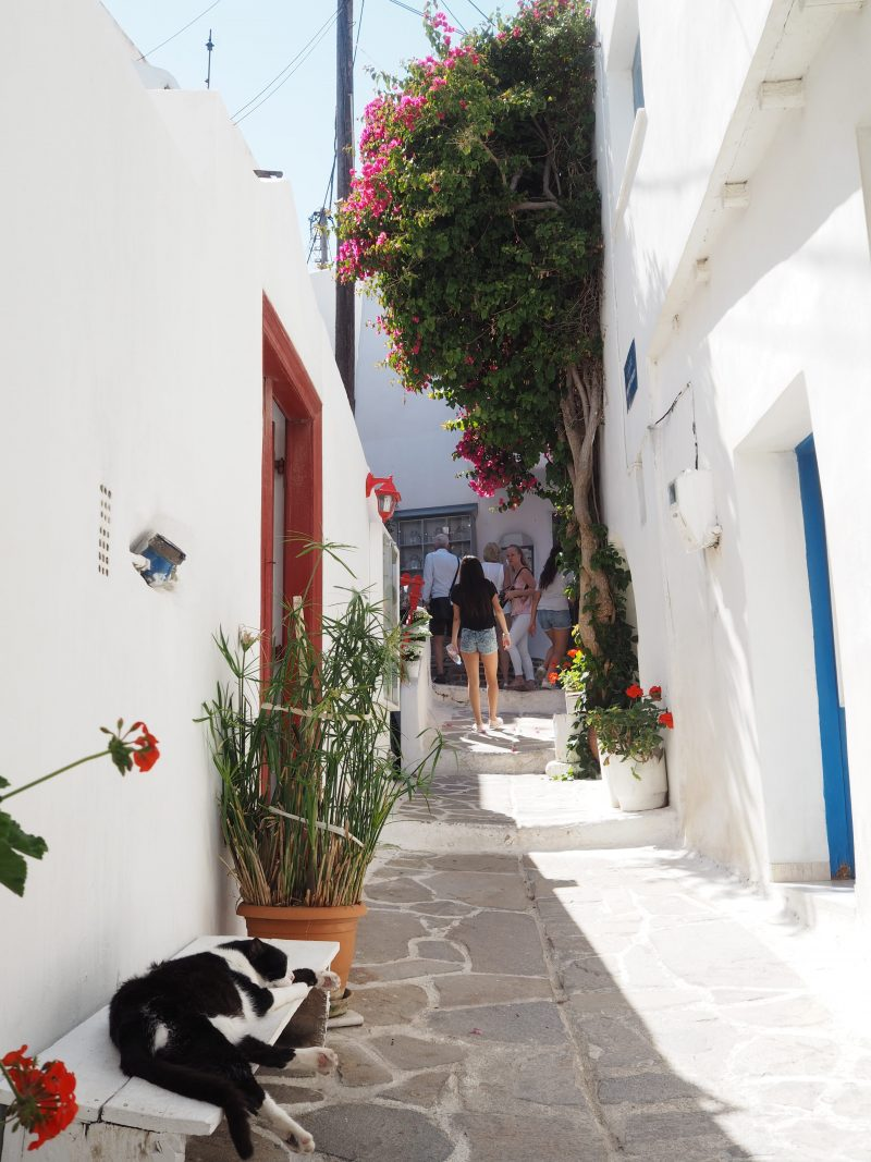 Cyclades Island Naxos Greece Narrow street cat