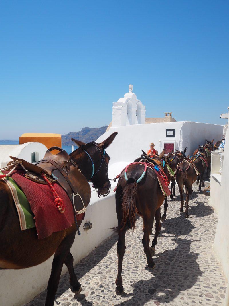donkey oia Santorini Greece