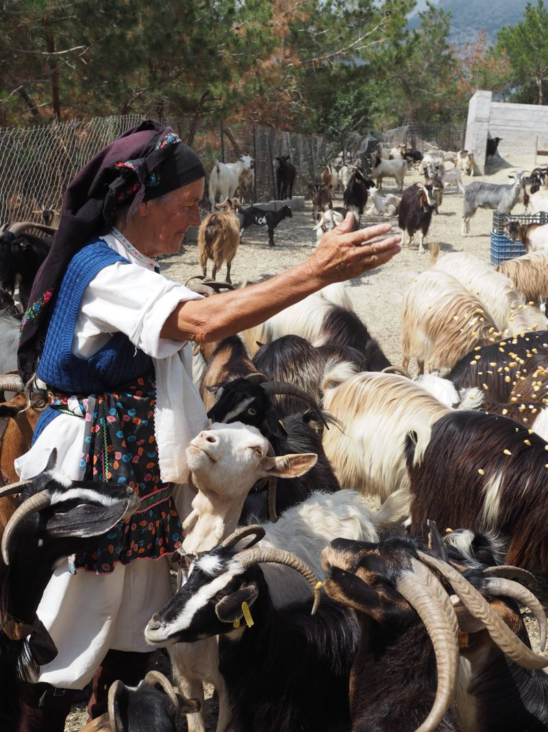 sheep milking Greece Argoni Karpathos Island