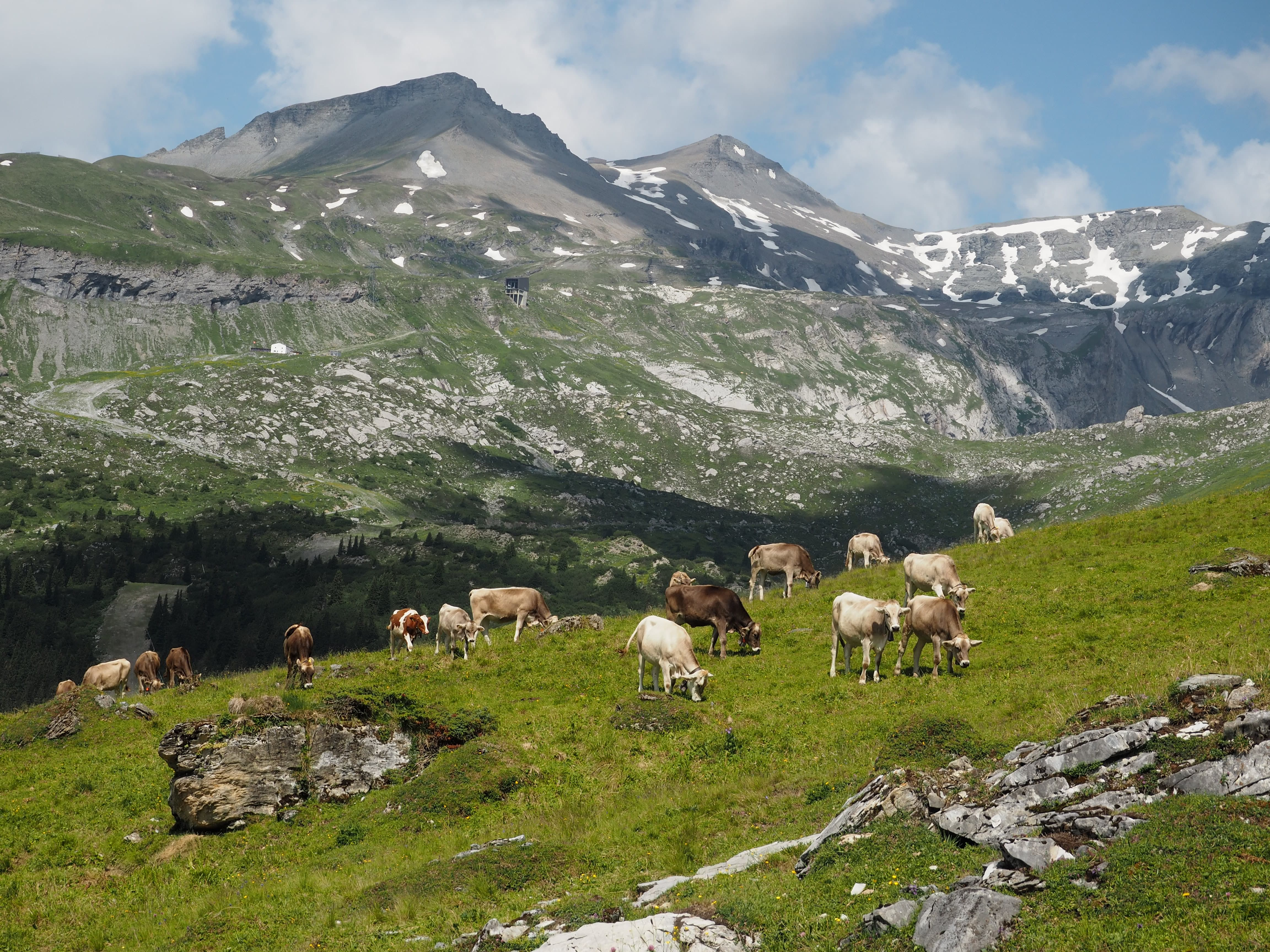 Switzerland summer vacation in Flims Hiking Segnes plains
