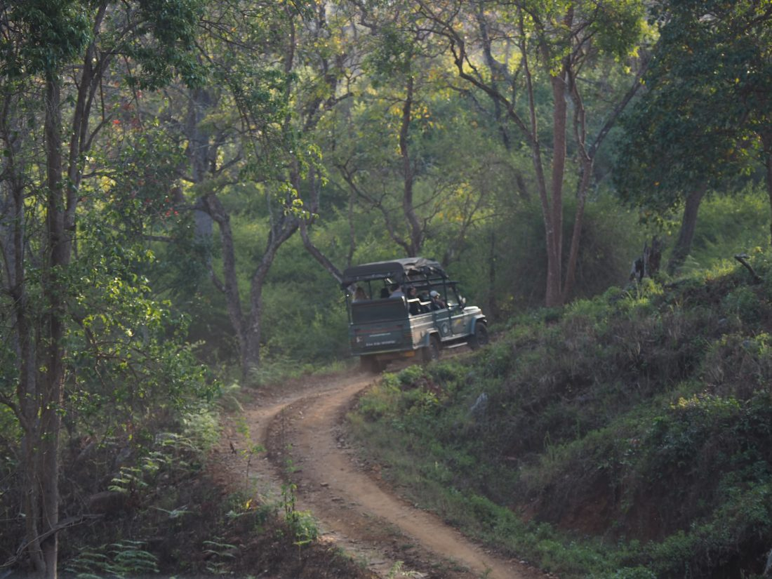 The golden chariot itinerary Karnataka safari Kabini national parc-min