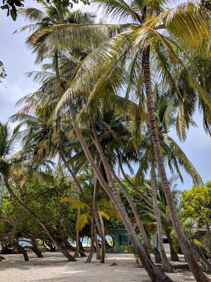 Maldives local island beach Fulidhoo island