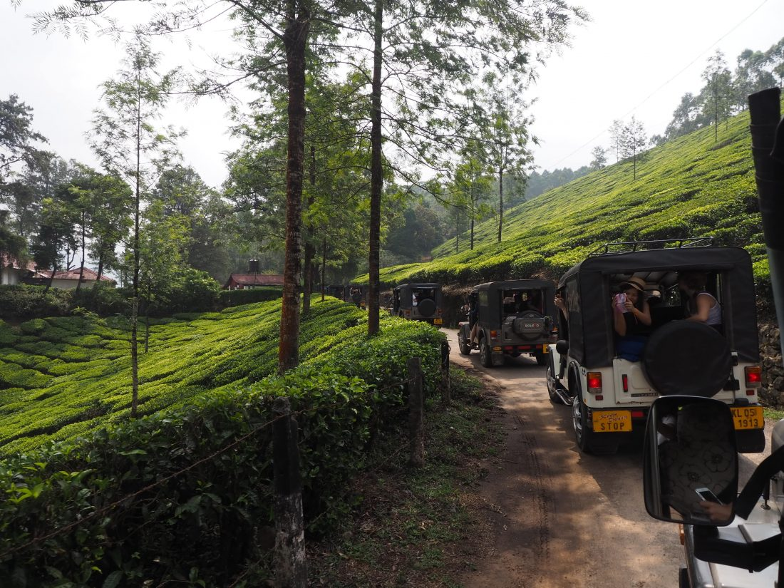 Munnar jeep tour tea field