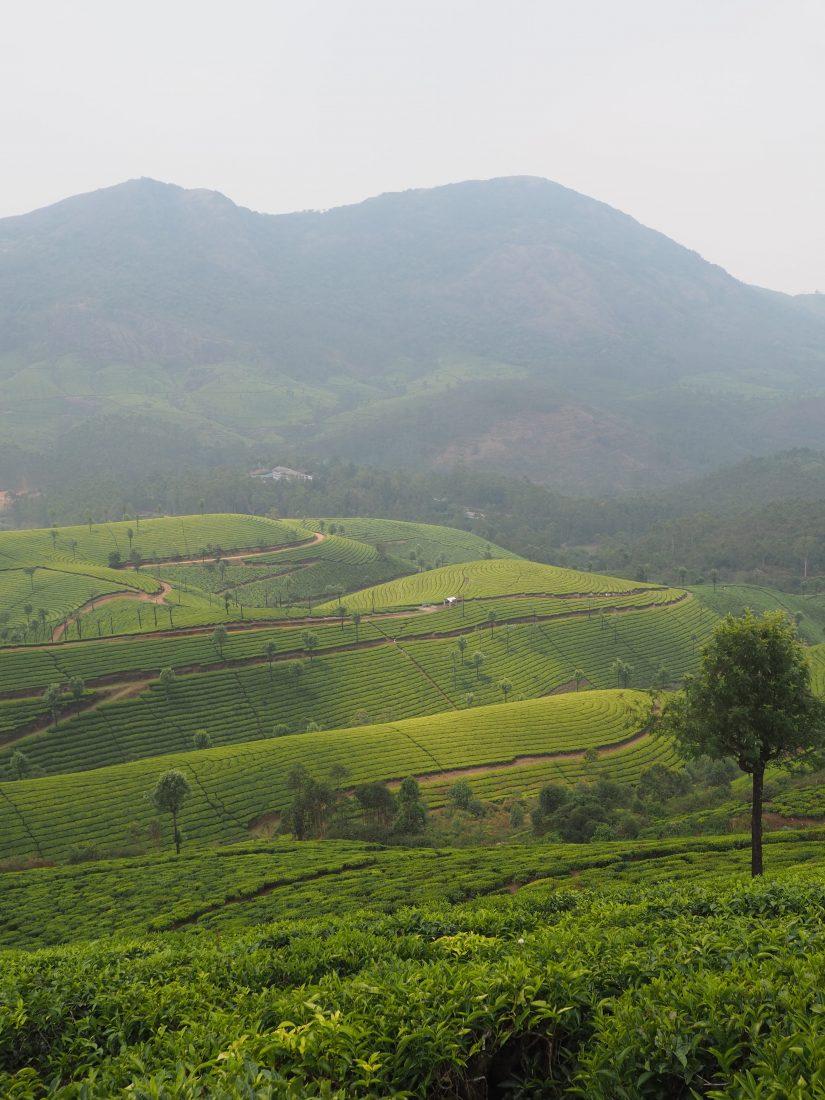 Munnar tea hills kerala