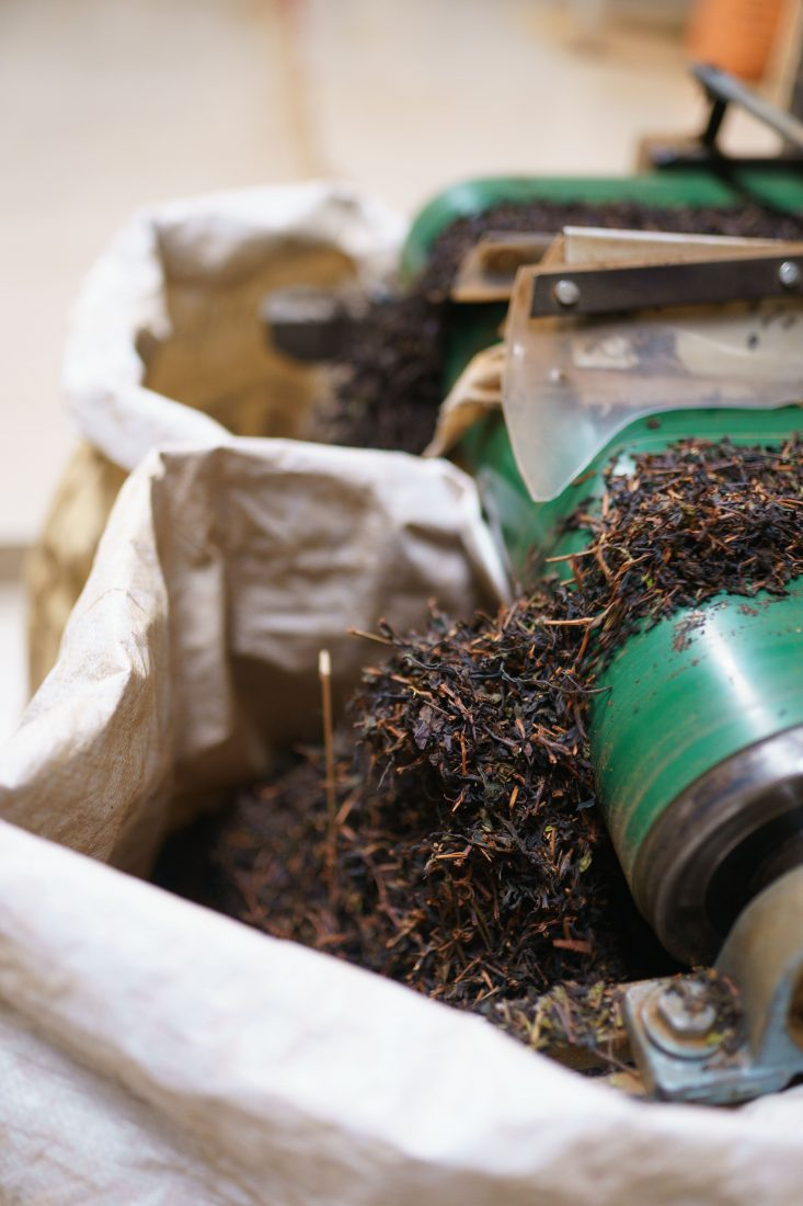 Munnar visit tea factory