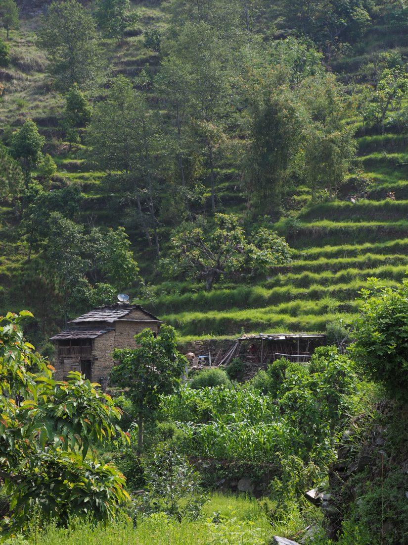 Short trek in Nepal - Mohare Donda trek 2