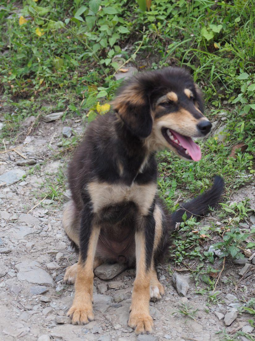 Short trek in Nepal - Mohare Donda trek dog