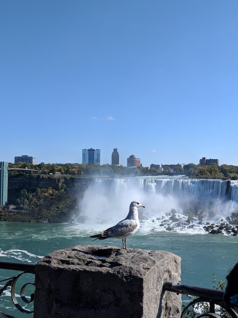 Niagara Falls trip from Toronto - How to see the Niagara Falls 1