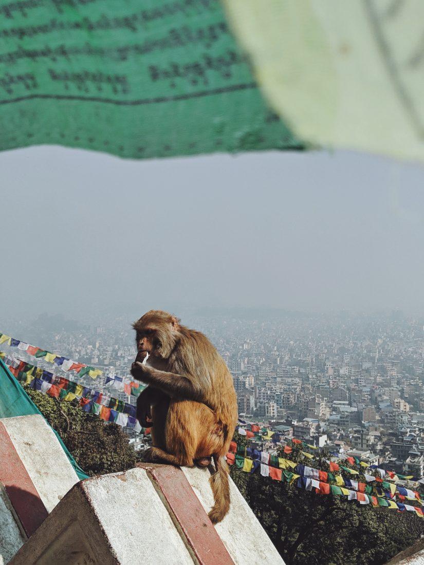 Kathmandu Sightseeing - Swayambhunath Stupa Monkey temple