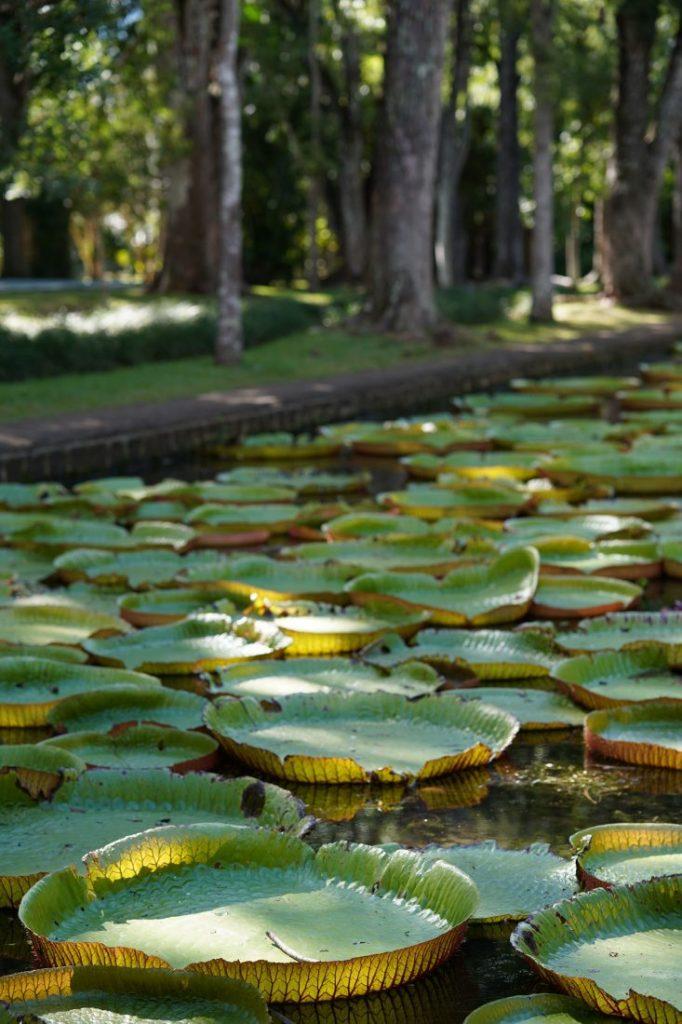 itinerary Mauritius Pamplemousse garden