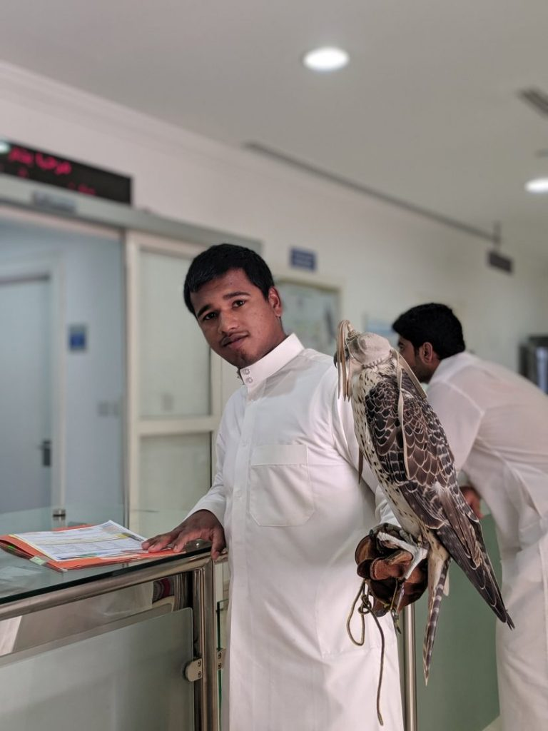 Things to do in Doha in summer Falcon hospital