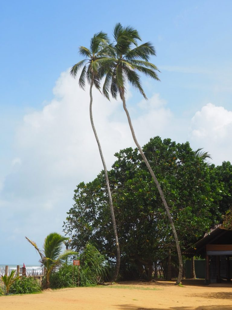 Ayurveda and yoga retreat in Sri Lanka - Review Siddhalepa resort