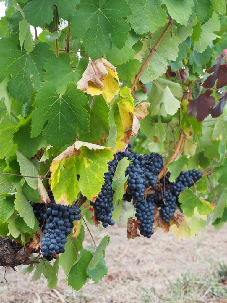La Negrette Fronton wine
