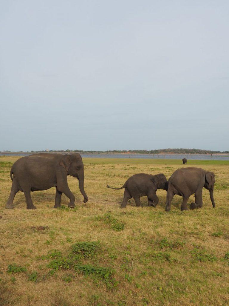 Sri Lanka itinerary - Sri Lanka travel blog Kaudulla National park