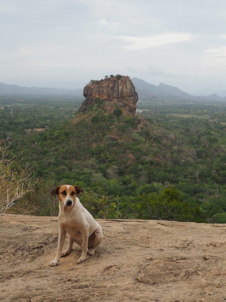 Sri Lanka itinerary - Sri Lanka travel blog must see in Sri lanka Sigiriya rock 1