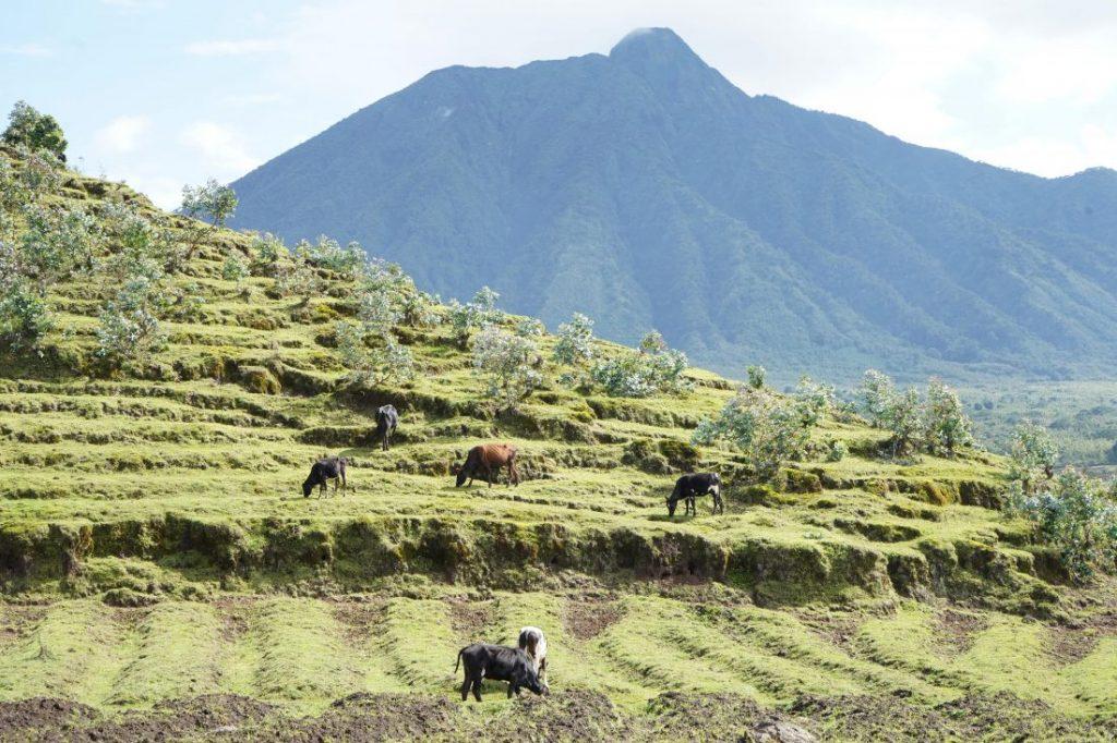 Things to do in Rwanda Volcanoes national Park