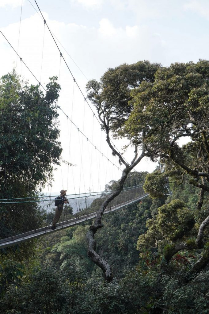 Things to do in Rwanda canopy walk