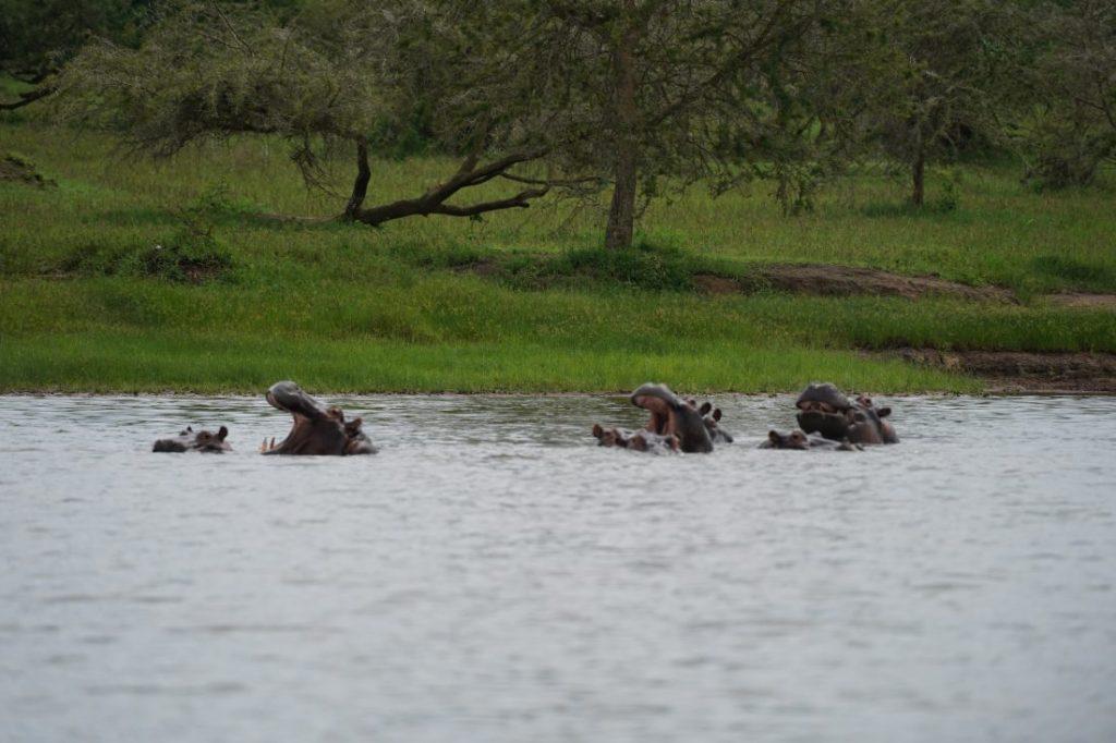 boat safari in Akagera - Rwanda 2