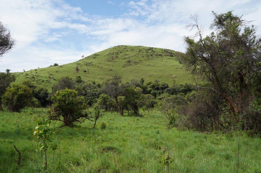 safari in Akagera - Rwanda landscape