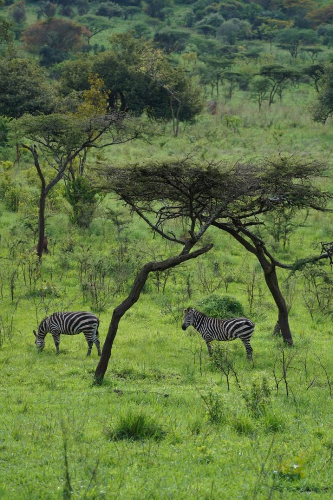 things to do in Rwanda  safari