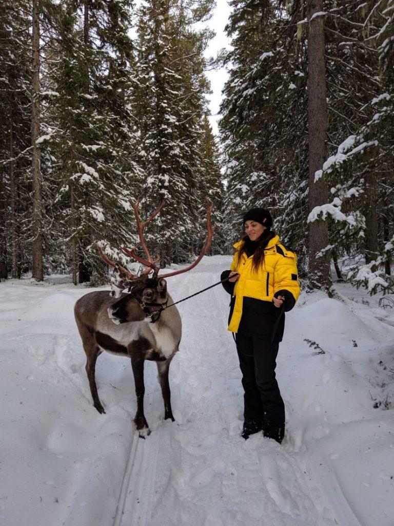 Visit Jamtland county Sweden winter wonderland reindeer-min