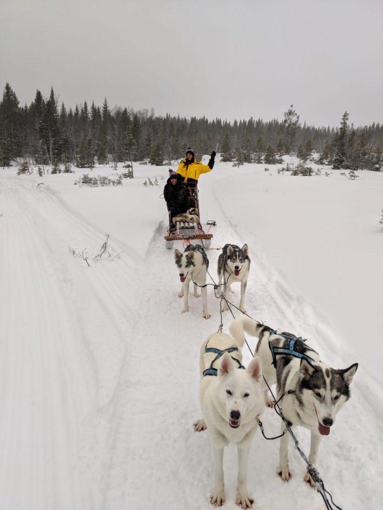 Winter activities in Jamtland Dog Sledging