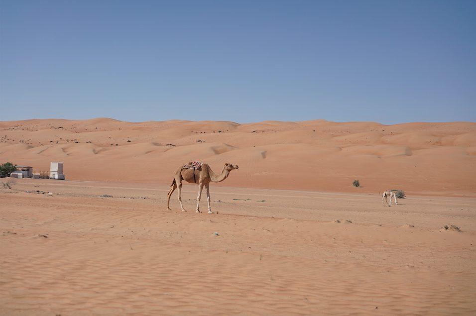 Self drive Oman road trip itinerary – 10 days