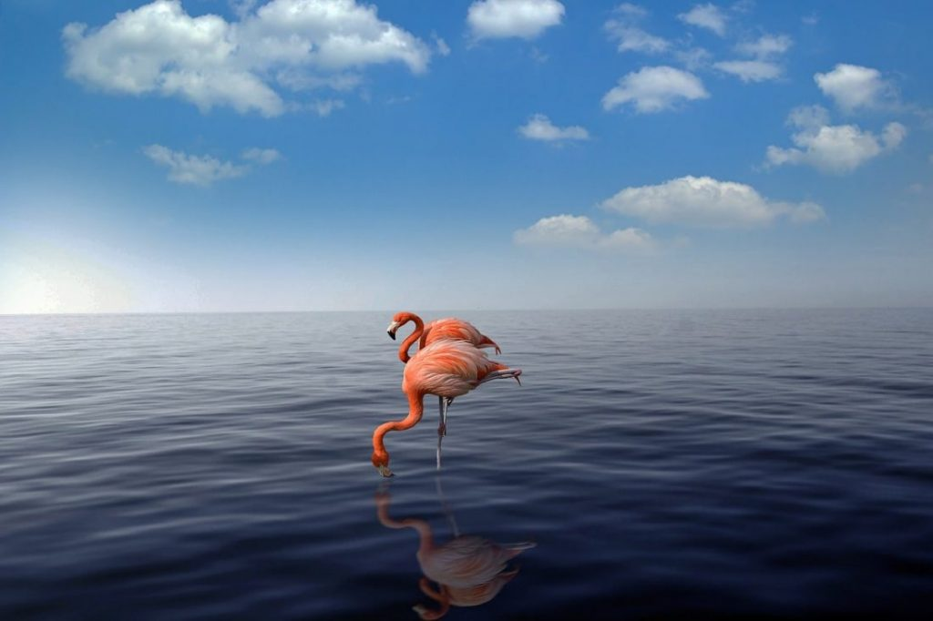 Most beautiful places caribbean Aruba flamingo